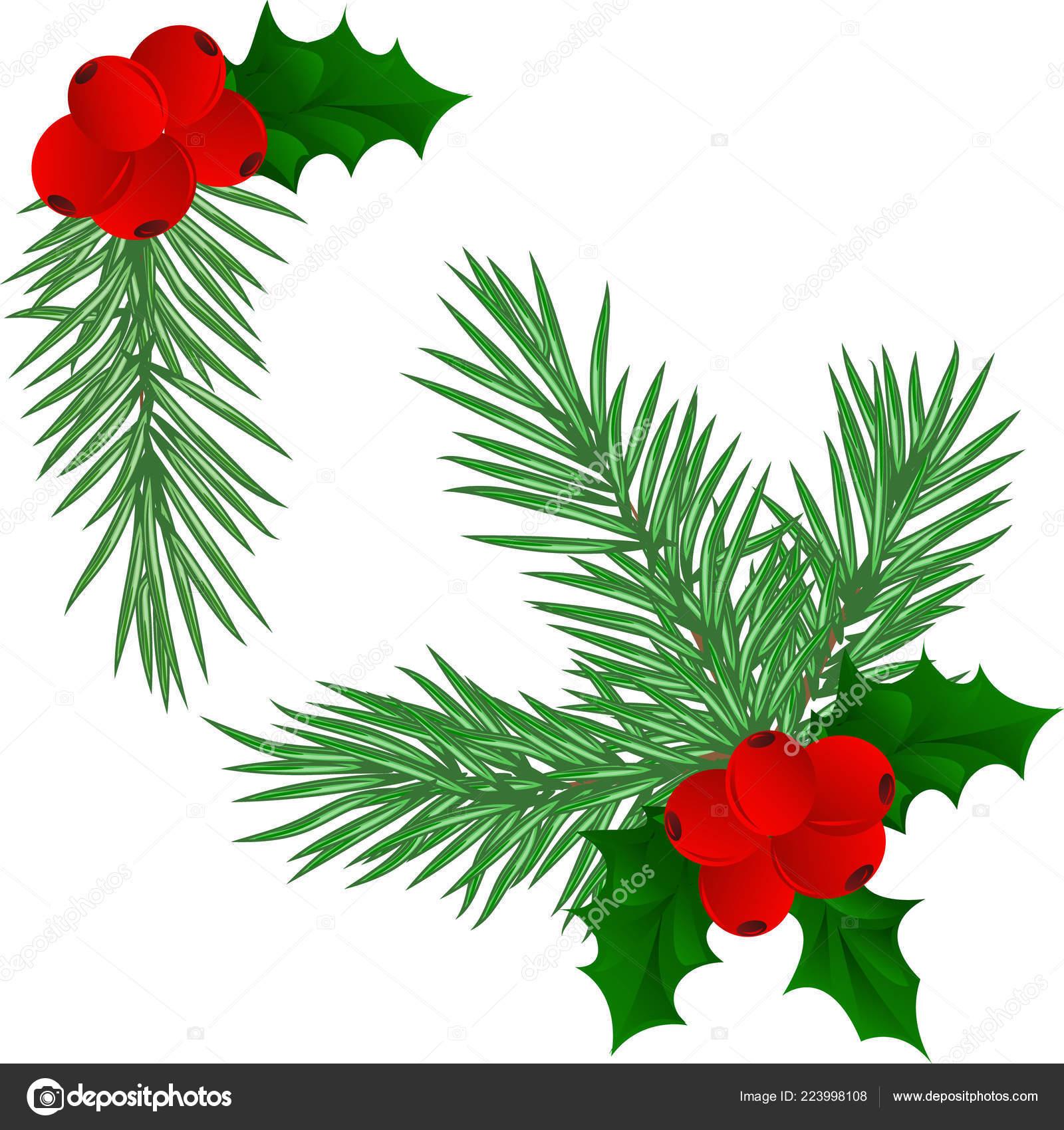 Christmas Branch Vector.Christmas Tree Branches Set Christmas Decor Branches Close