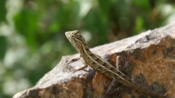 Chameleon na skalách