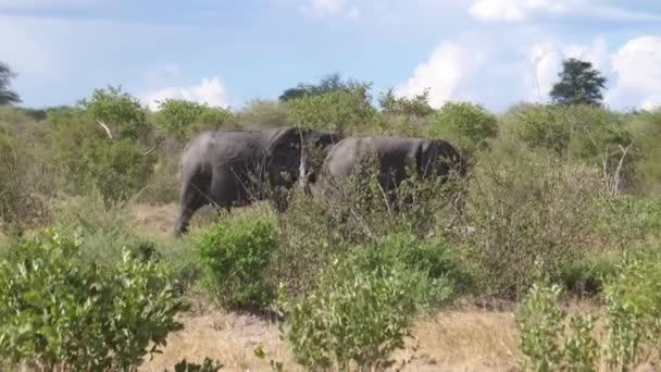 Kolem projíždějí afričtí sloni