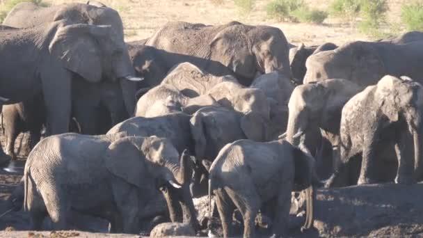 Stádo afrických slonů sbalených dohromady v téměř suché vodní díře