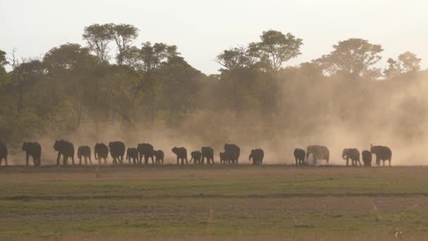 Afrikai Bush elefántok csordája sétál a száraz szavannán naplementekor.