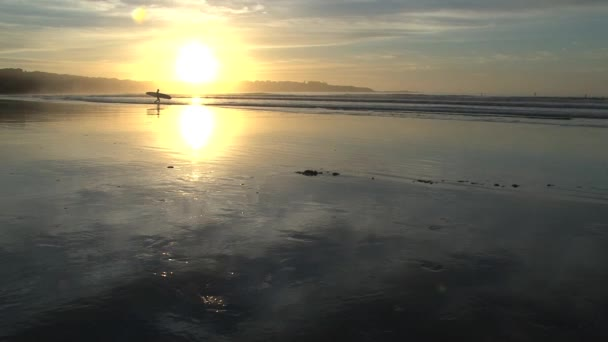Surfer walking on the beach, Sydney, Ausztrália