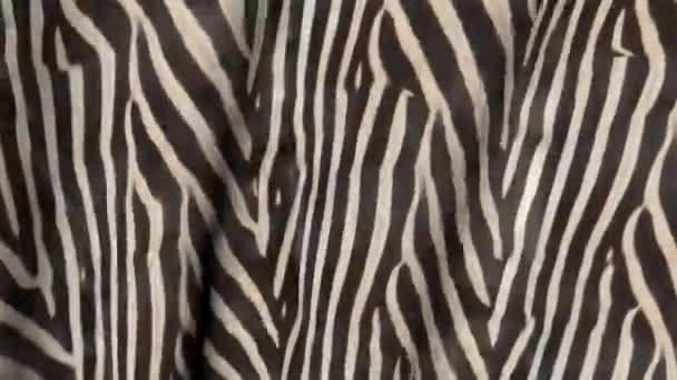 Hullámok, Zebra-színű szövet. Absztrakt 3D-s textúra a mozgalom.