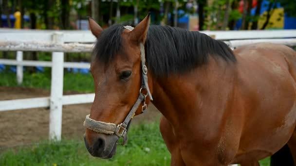 Kůň v padkotli. Sportovní koně v postroji.