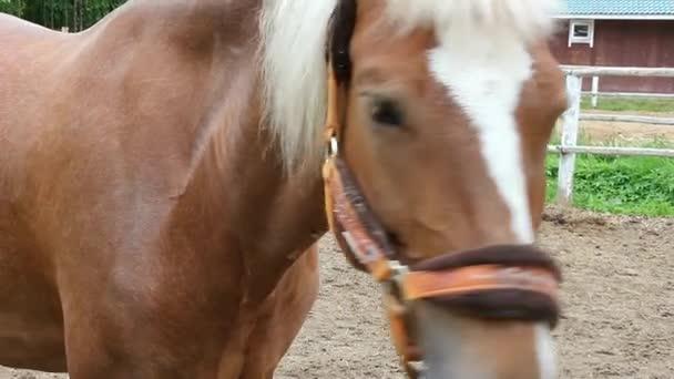 Pferd im Fahrerlager. Kopf anmutige Pferd in der Nähe. Schöne Tier Wallach und seine Augen. Sportpferde im Geschirr.