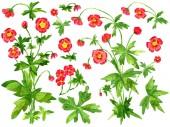 Látványelemkészlet piros anemone virágok és levelek elszigetelt fehér. Akvarell rajzfilm doodle illusztráció, botanikus és fantázia rajzok nyomtatása, üdvözlőlapok, plakát, meghívók