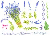 Design set with lavender flower bunch, decorations, herbs and text. Hand drawn illustration. Graphic spring elements for invitation, greeting card, decoration, isolated object on white background