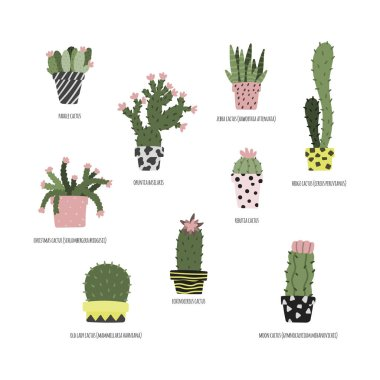 Hand drawn set of house plants. Cacti and succulents types.