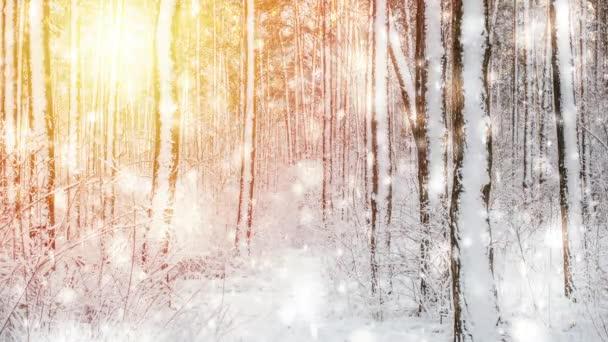 Bäume mit Schnee bedeckt an einem strahlend sonnigen Wintertag