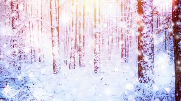 Schöne verschneite Bäume Fichten im Wald im Winter während eines Schneefalls. Sonne, sonnigen Tag, Sonnenstrahlen, sonniger Lage. Fantastische zauberhafte Märchenlandschaft. Weihnachten Silvester Winterlandschaft Hintergrund