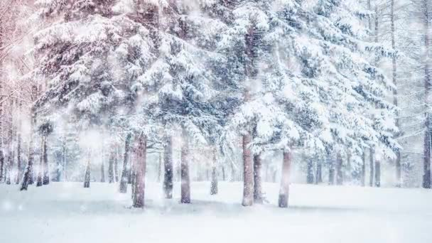 Beautiful snow-covered trees spruce in the forest in winter during a snowfall