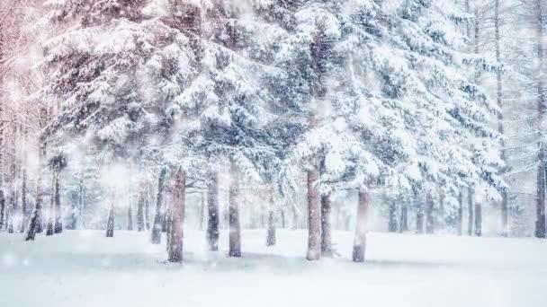 Schöne verschneite Bäume Fichten im Wald im Winter während eines Schneefalls