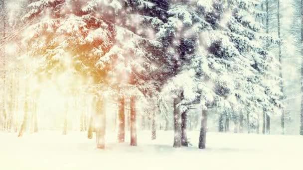 schöne schneebedeckte Bäume Fichten im Wald im Winter bei Schneefall