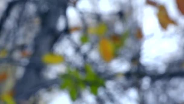 Rozmazané pozadí listí na podzim strom