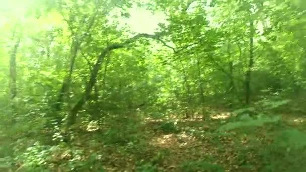 Procházka v lese. Chůze na dřevo.