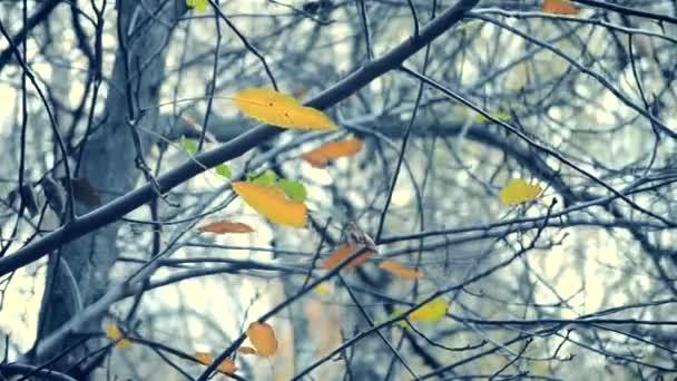 Žluté a hnědé listy na větvích stromu podzimní sezóny
