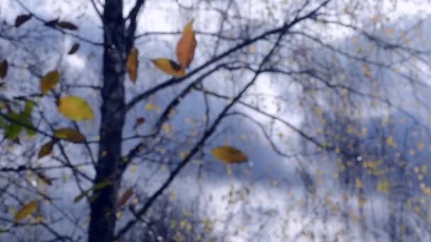 Žluté listy na větvi na pozadí modré oblohy temné mraky close-up.