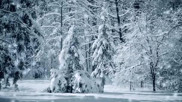 Fantastische märchenhafte magische Landschaft Ansicht Weihnachtsbaum Forest Park