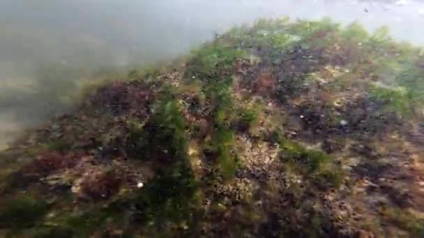 Blick auf die Algen, die auf der Oberfläche der Steine am Boden wachsen