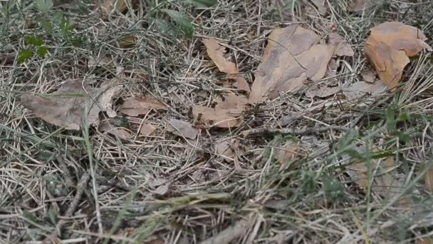 divoký život Bělorusko, Evropa: Přehled pracovních časované mravenci na vrcholku Mravenčí kopec zblízka. Velmi mnoho mravenců. Uzamčení