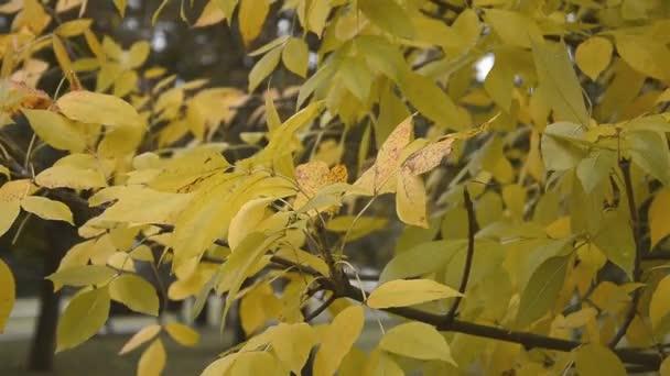 Podzimní příroda pozadí, žluté listy větev