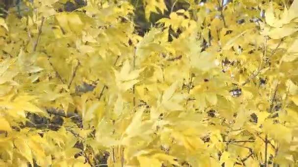 sfondo di foglie dautunno
