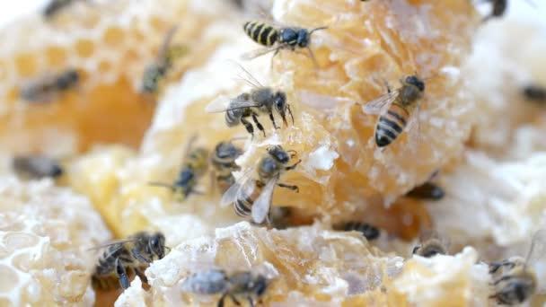 Bienen arbeiten an Honigzellen