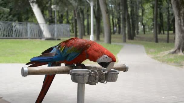 Szép kegyes neo trópusi ara nemhez színes tollas Ara papagáj madár hosszú keskeny farok közelről