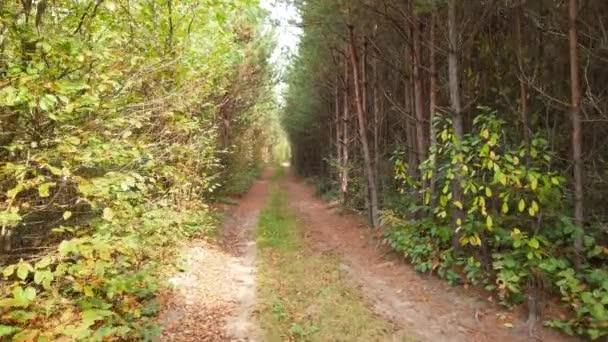 Cesta v podzimním borovicovém lese.
