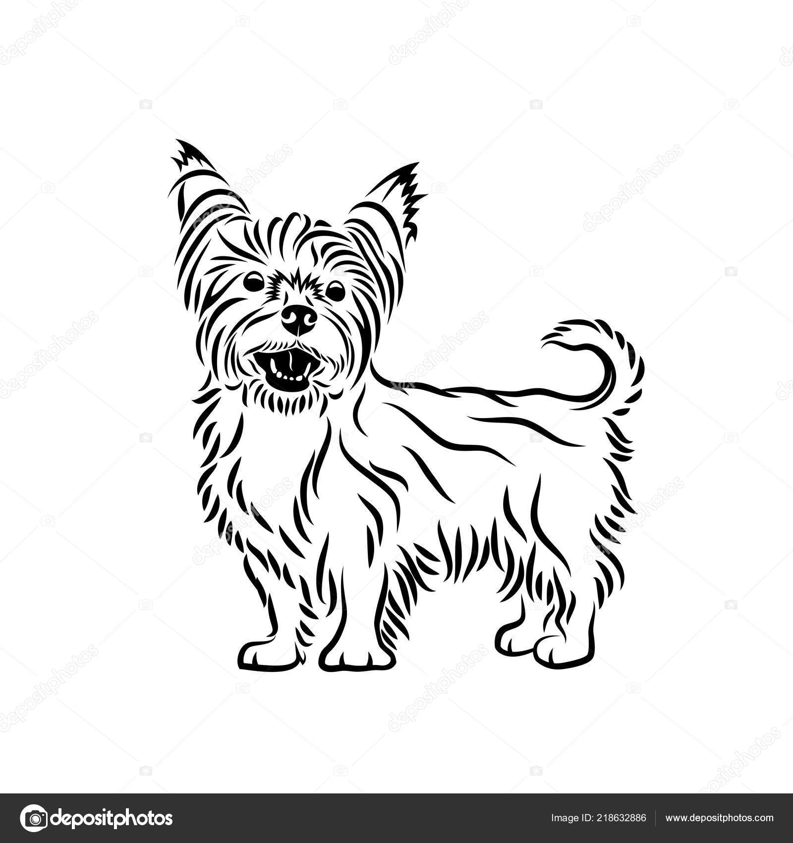 ᐈ Yorkie Silhouette Royalty Free Chorkie Images Download On Depositphotos
