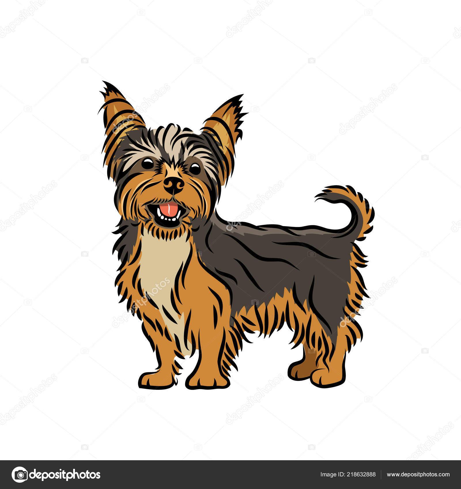 Yorkshire Terrier Illustration White Background Stock Vector C I