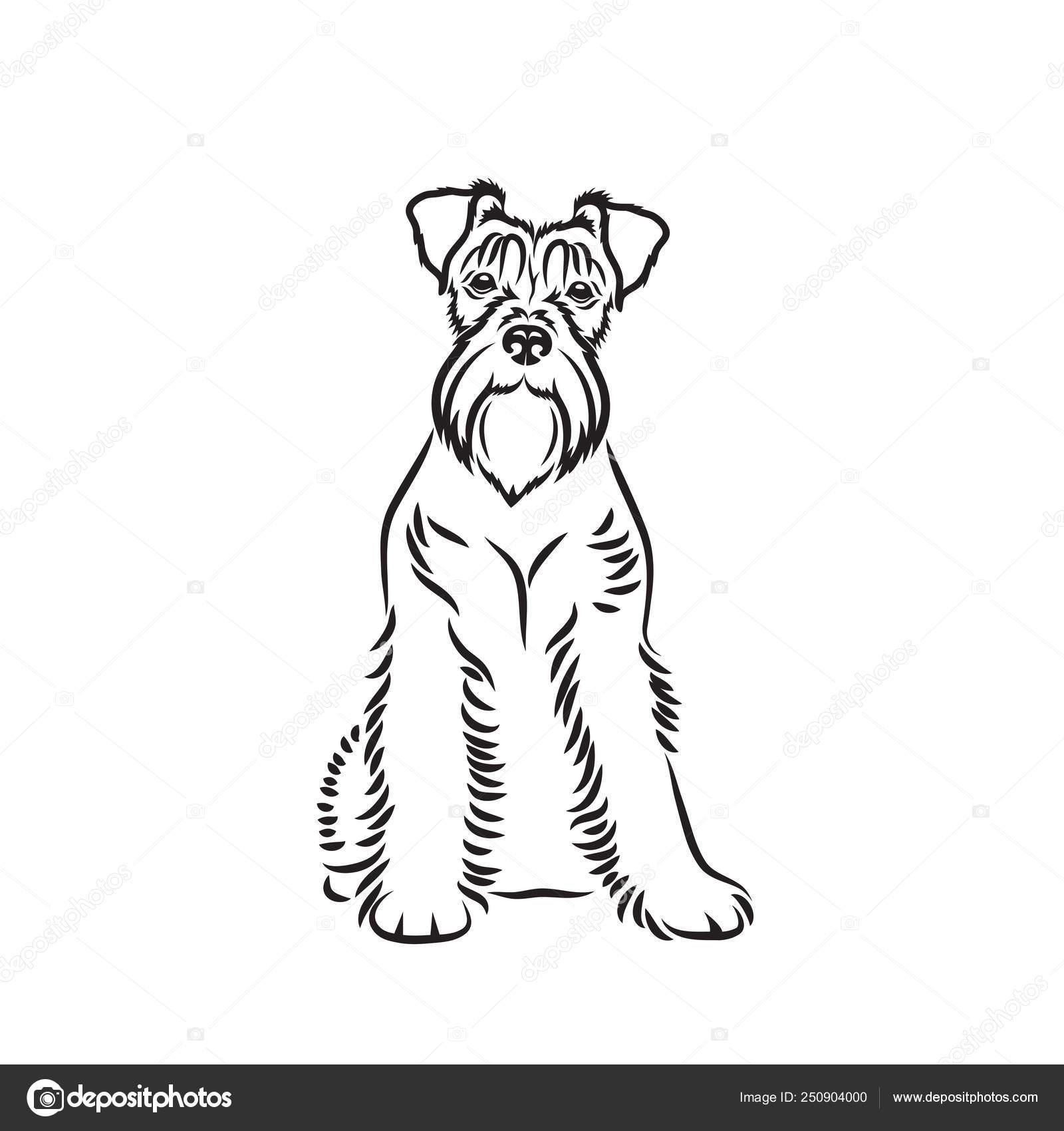 Ilustración Perro Adorable Schnauzer Vector De Stock Ipetrovic