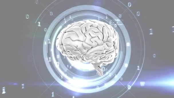 Digitally generated human brain scrolling  Background shows glowing digital  circle and binary numbers