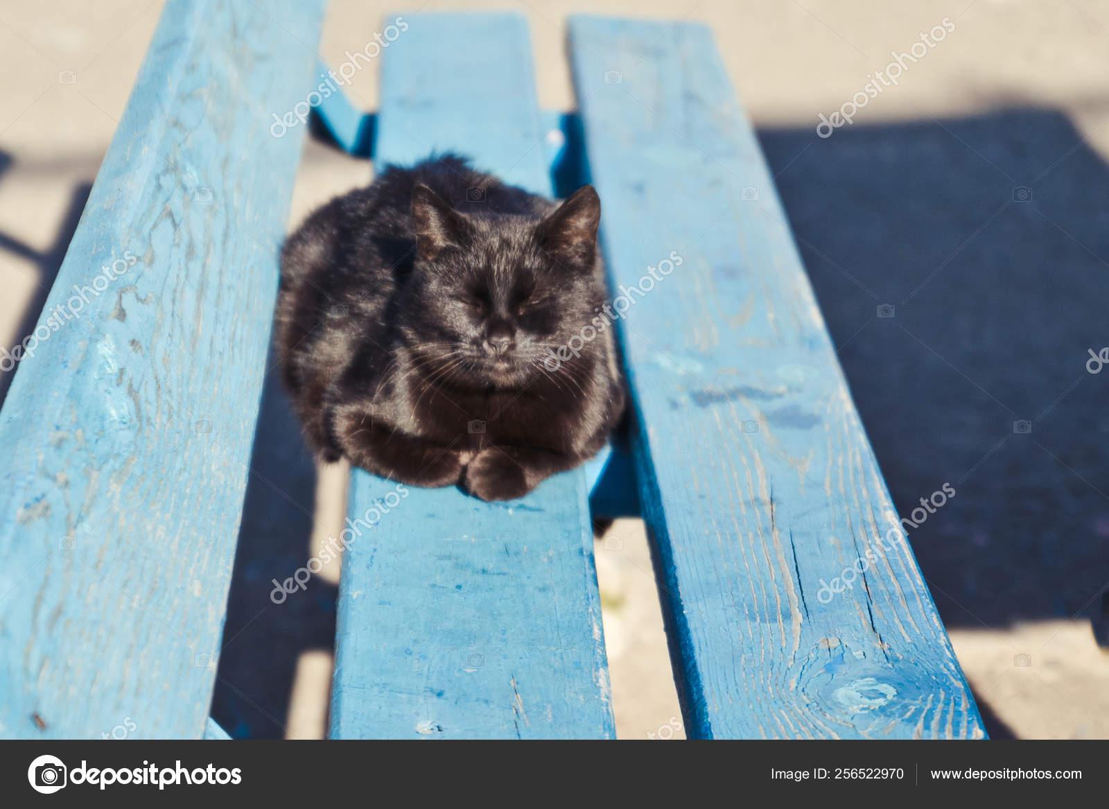 černé péro a kočička obrázky mladé čerstvé kočička fotky