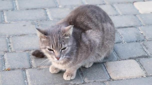 Ulice šedá kočka, která sedí na zemi v parku a dívá se na kameru