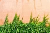 szőlő ruhás terrakotta színű fal a háttérkép