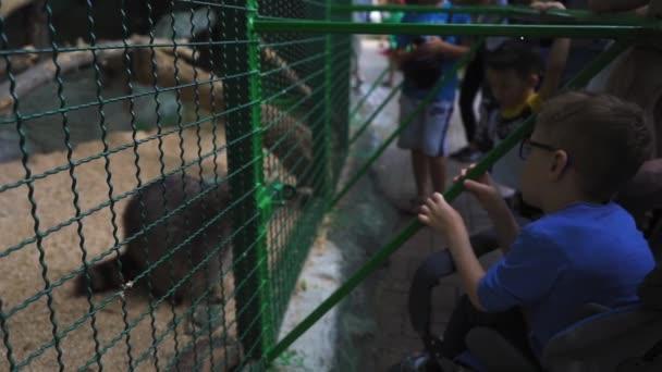 Ein kleiner Junge im Kinderwagen blickt auf einen Waschbär im Käfig, der an schmackhaftem Gemüse kaut, mit dem ihn eine Gruppe kleiner Kinder behandelte. Kiewer Zoo. Juni 2020. Kiewer Ukraine. Filmmaterial mit Ton. Prores 422