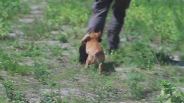 Hund läuft dem Mann hinterher Welpe Shepherd holt den Besitzer auf dem Feld ein. Ein Mann spielt mit einem Welpen. Hochwertiges FullHD-Filmmaterial