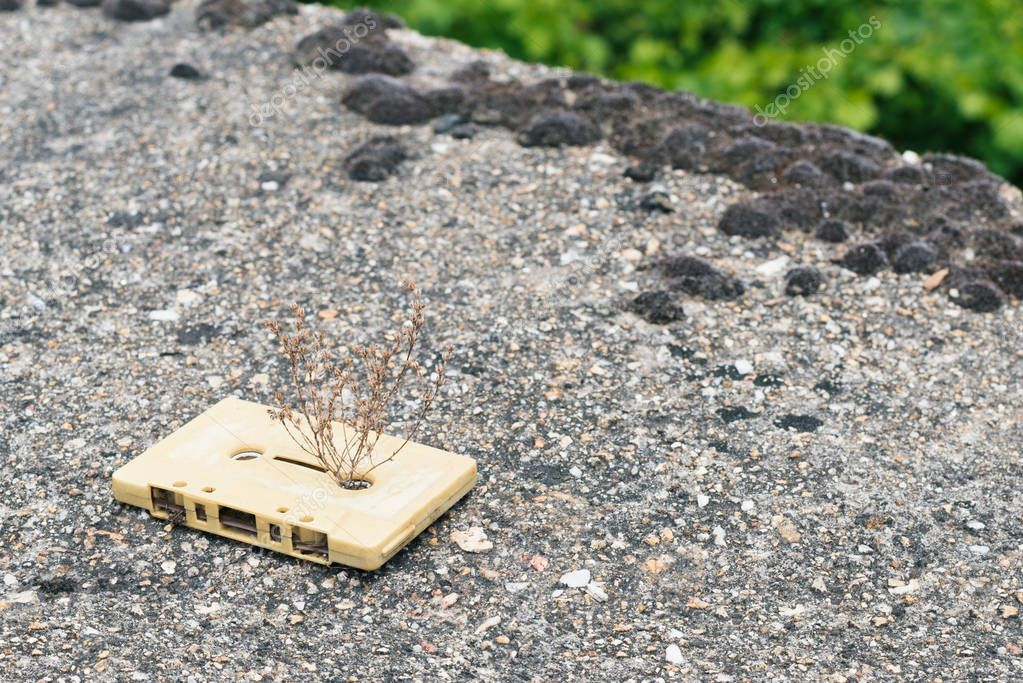 A cream vintage cassette tape from the 1980s era (obsolete music technology) with the grass grew through