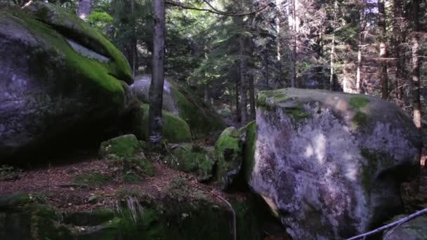foresta di paesaggio del deserto. vecchia scogliera e muschio ha coperto le rocce nel bosco magico drammatico