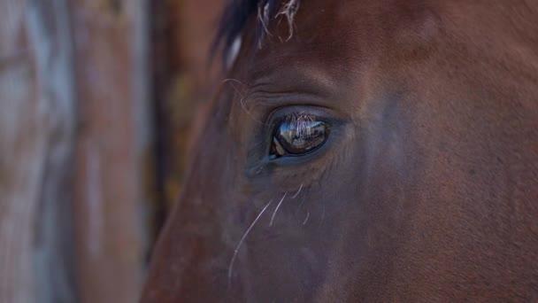 Szoros portré barna ló a gazdaságban vagy farmon