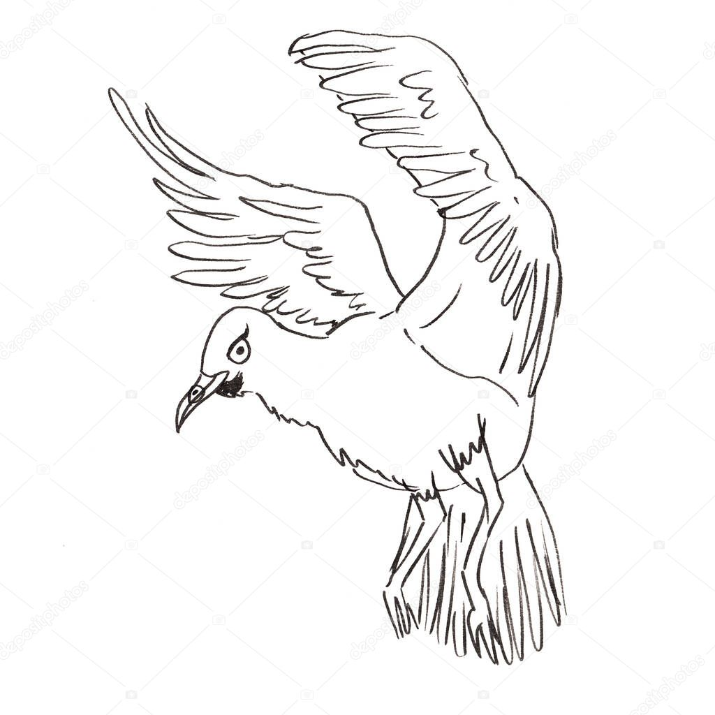 The Flying Seagull In Cartoon Style Outline Vector Illustration Coloring Pages For Adults Premium Vector In Adobe Illustrator Ai Ai Format Encapsulated Postscript Eps Eps Format
