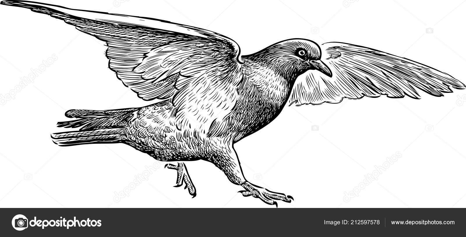 Dibujo Una Paloma Volando Mano Archivo Imágenes Vectoriales