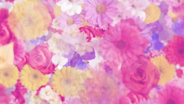 Elegantní květinový pohyb pozadí animace s různými květy: alstroemeria, karafiáty, chryzantémy, sedmikrásky, gerber, gladiola, hortenzie a růže, v pastelových barvách jemně se pohybuje směrem k fotoaparátu.