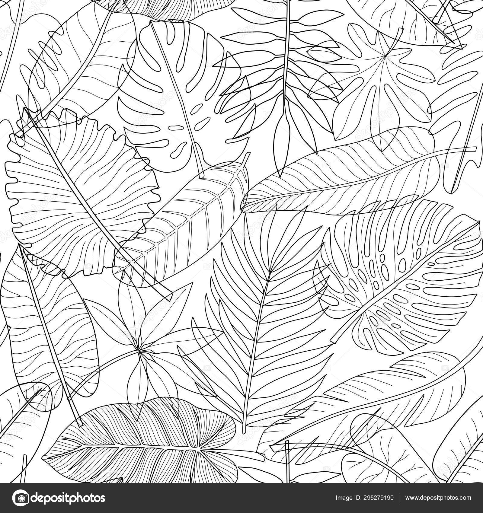 Leaves Of Tropical Plants Black And White Outline Seamless Pattern Stock Vector C Kronalux 295279190 Monstera tropical outline leaves and splashes big vector. leaves of tropical plants black and white outline seamless pattern stock vector c kronalux 295279190