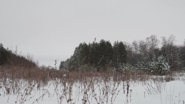 Zimní příroda v lese. Zimní krajina