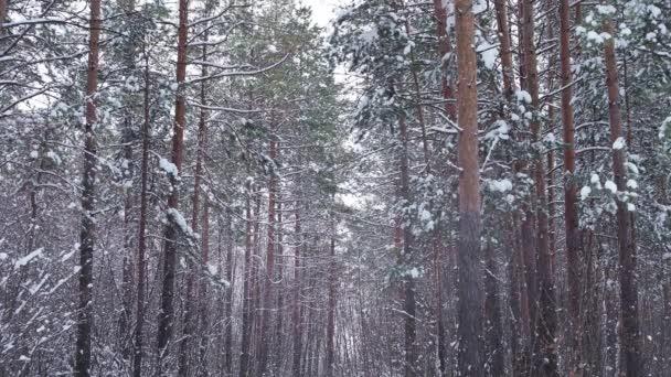 chladné a zasněžené zimní les