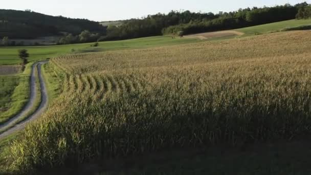 Letecký pohled na kukuřičná pole při západu slunce v Monferratu, severní Itálie.