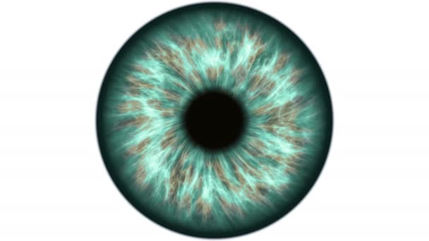 Green human eye dilating and contracting. Very detailed extreme close-up of iris and pupil.