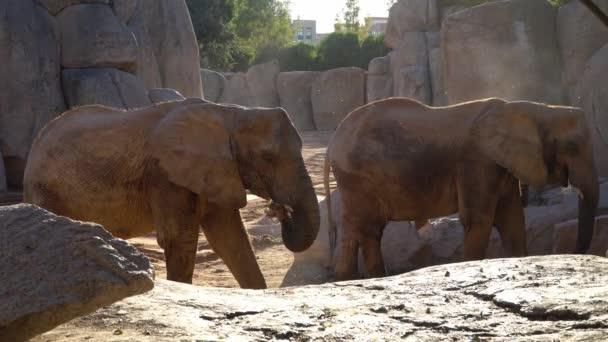 Africké savany slon. Druh: Loxodonta africana, rodinné: Slonovití, objednávky: chobotnatci, třída: Mammalia.